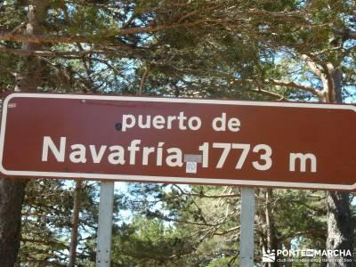 El pinar del Puerto de Navafría;sierra de gredos;selva de irati;amigos